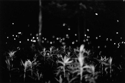 gregory-crewdson-fireflies.jpg__524x349_q85_crop_upscale